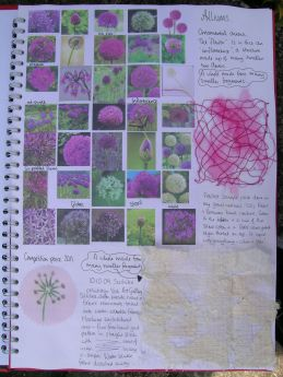 Alliums sketchbook page