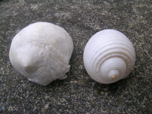 Silk paper shell 2